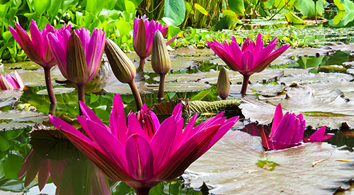 Jardin d'eau laurentides